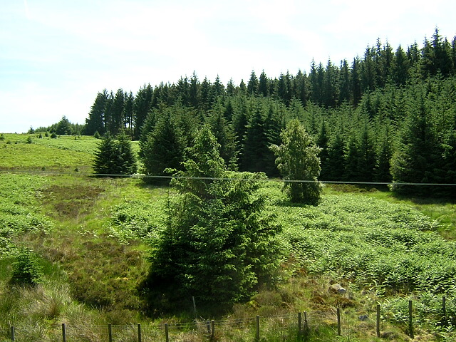 Hillside in Kielder Forest