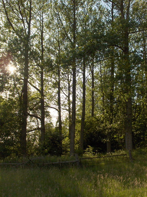 Woodland next to Machany Water