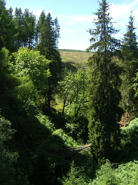 Ravine Near Leaplish Crag