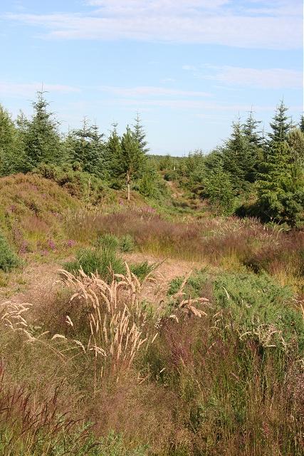 Hill of Menduff