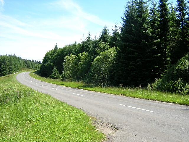 Roadside Forest