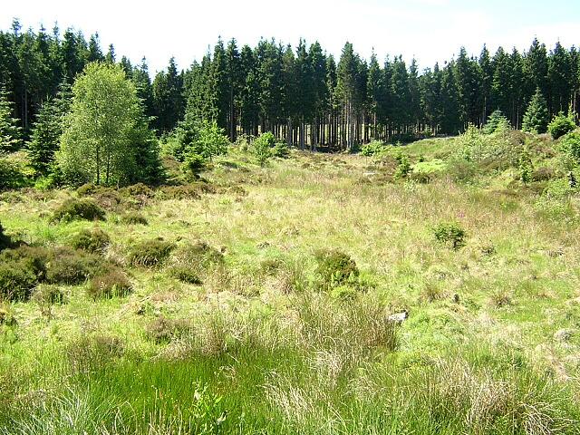 Clearing in Kielder Forest