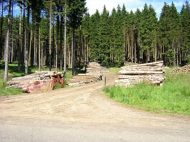Log Piles Beside Kielder to Newcastleton Road