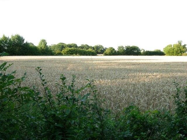 Farmland near Copston Magna