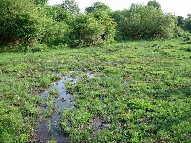 Boggy area by Latchmore Brook