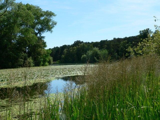The informal lake