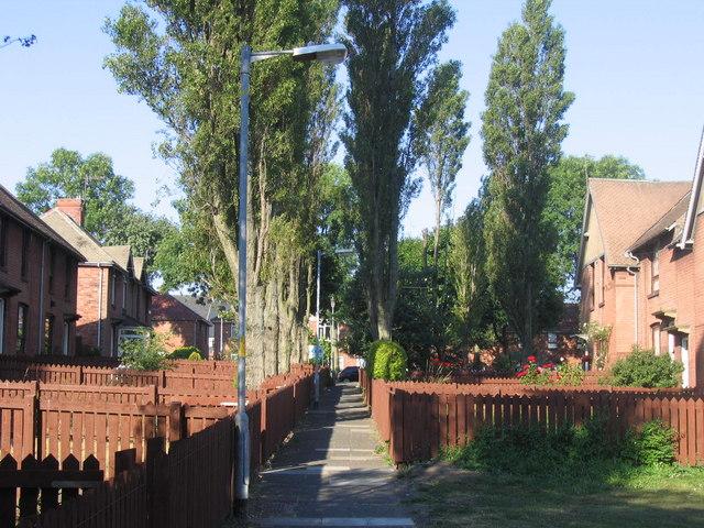 Cowpath Lane