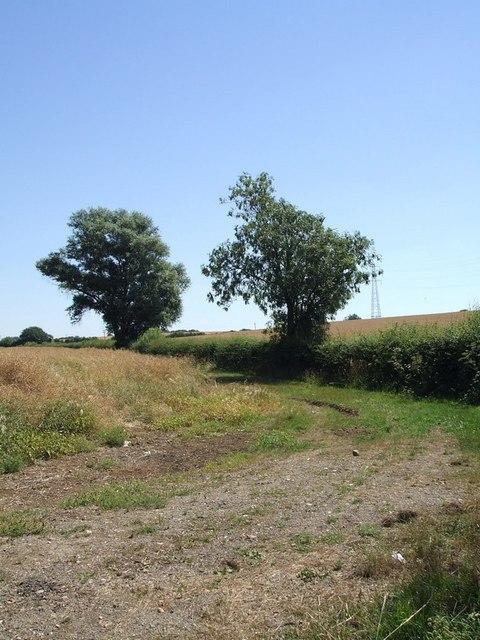Boundary hedge north of Tebworth