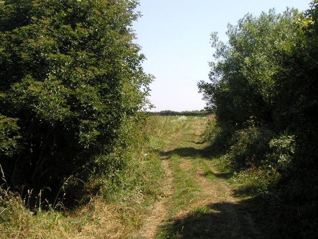 Mill Road (track)