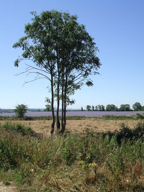 Trees and Fields near Wingfield
