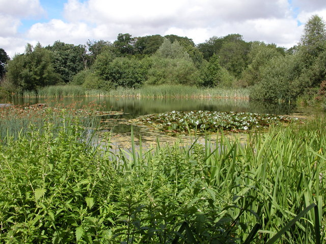 Wildlife pond, Mannington Hall