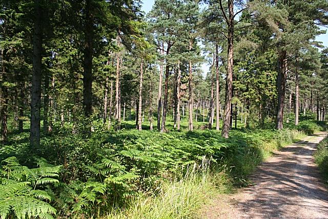 Badentarget Plantation