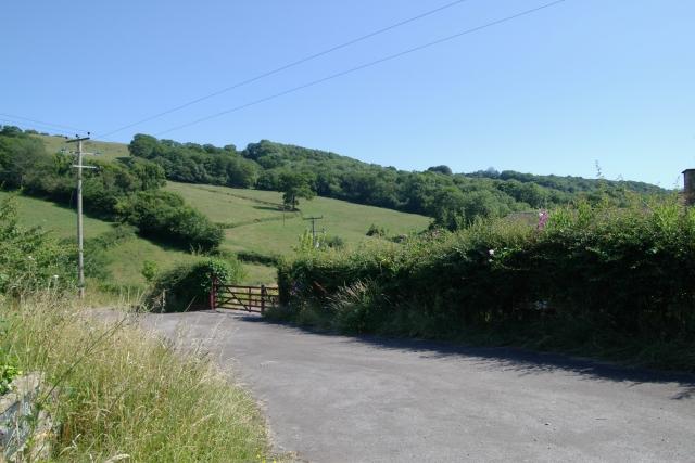 Mincombe Wood from Mincombe Farm, Sidbury