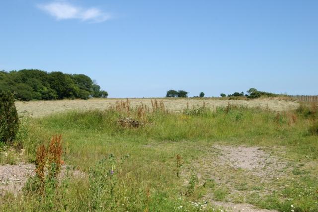 Cut hay, Moorlands Farm, Sidbury