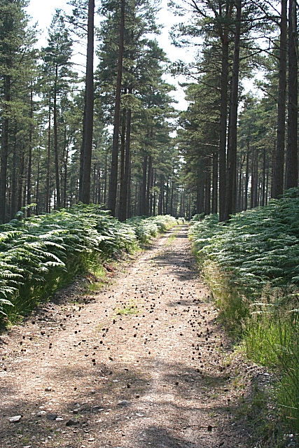High Glen Plantation