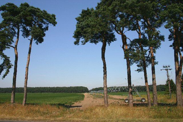 Irrigation at Elveden