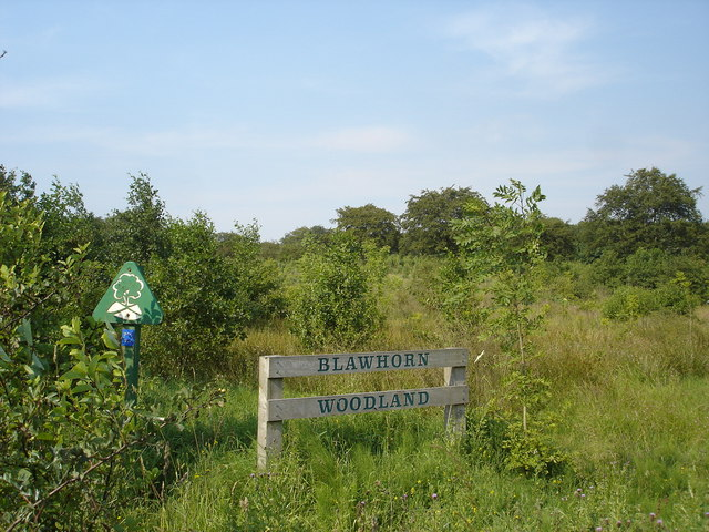 Blawhorn Woodland near Bedlormie House, Blackridge