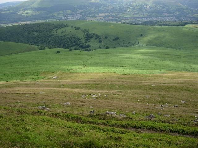 Paths in the bracken