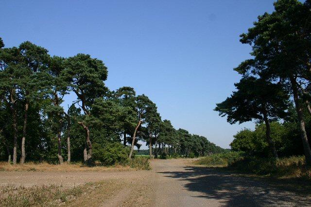 Farm tracks at Elveden