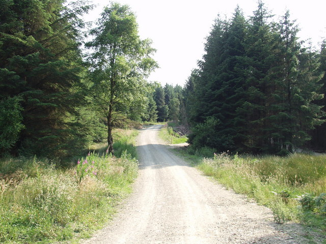 Forest access road and bike track, Llandegla Forest