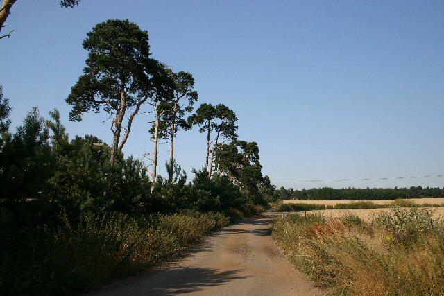 Farm track at Icklingham