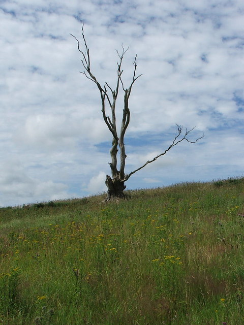 Dead tree beneath Black Cairn