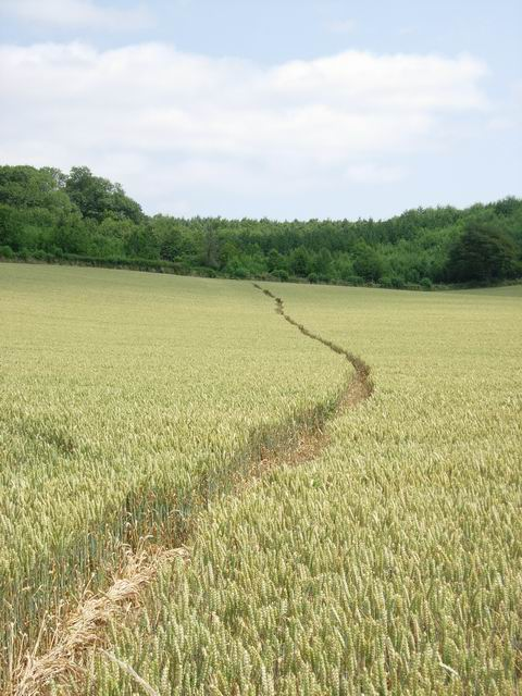 Path through crop