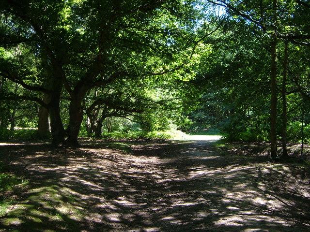 Kingswood Common