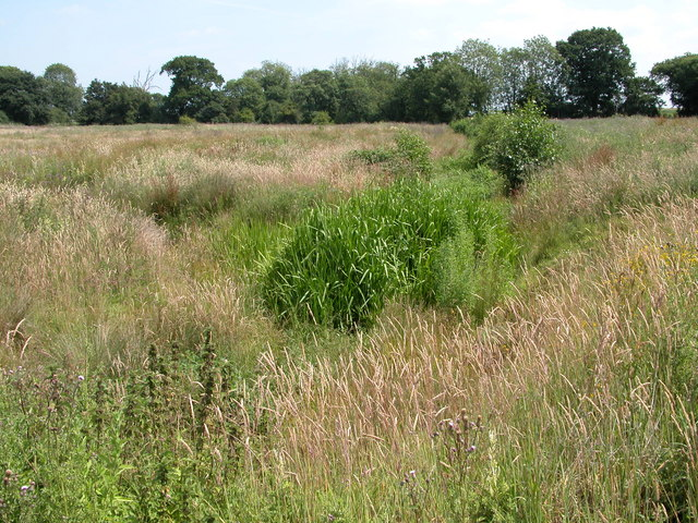 Rough meadowland, near Hanworth