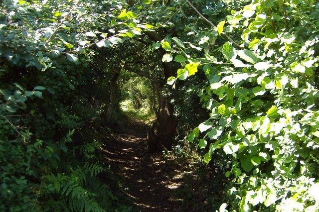 Green lane to the Barnton Cut