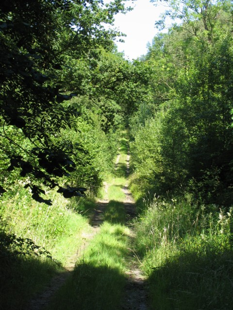 Track into Owston Woods