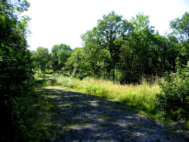 Owston Woods