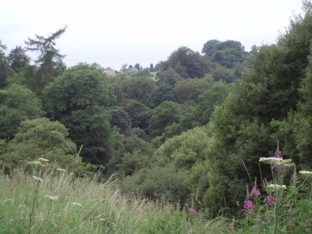 Woodland on west side of Fankerton