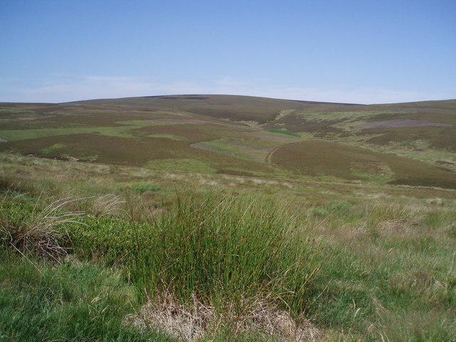Moorland Mosaic