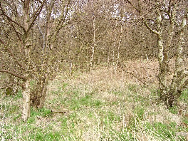 Birch woods, Snawdon