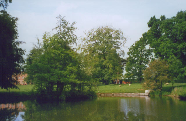 Pond at Gestingthorpe