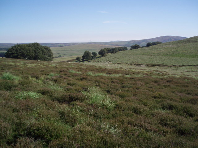 Heather, rough grassland and scattered trees.