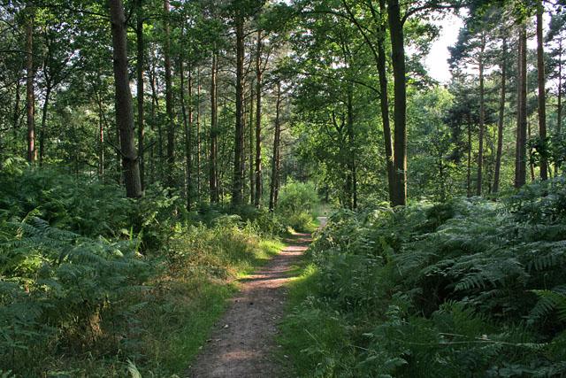 Martinshaw Wood