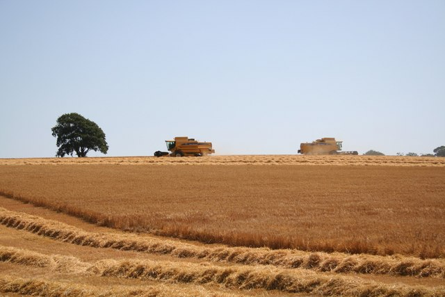 Harvesting on Hoe Hill