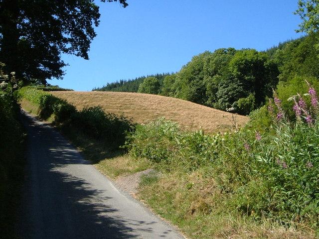 Lane beside valley of Nant Llys