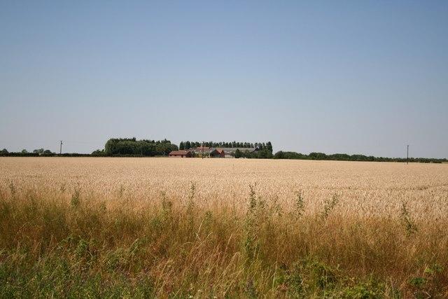 Low Field Farm from Big Wood