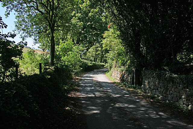 Leafy lane at Flasby