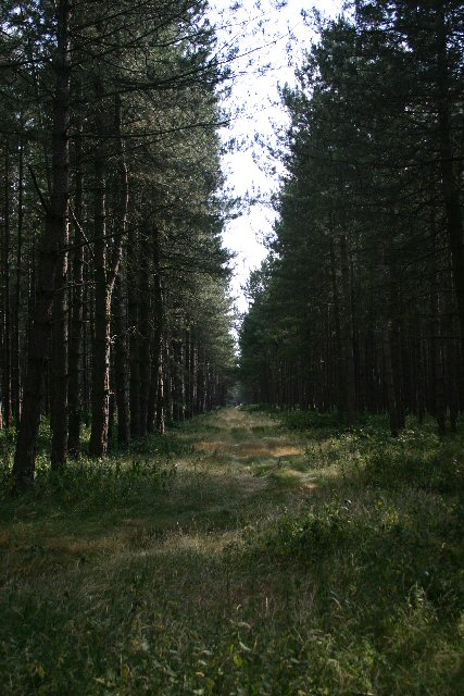 The King's Forest from Icklingham Belt