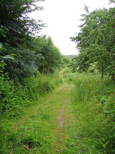 Woodland track, Ludford