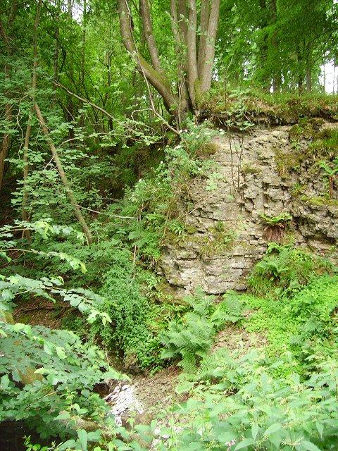 Quarry, Bringewood