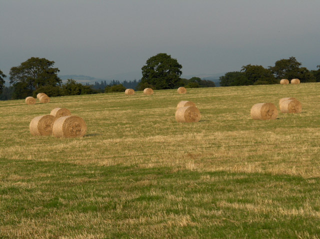 Hay-meadow, Middleton