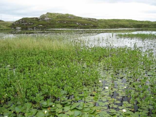 Water lilies on Loch Shobhail