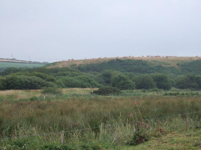 Wetland source of Afon/River Cleddau, North Pembs.