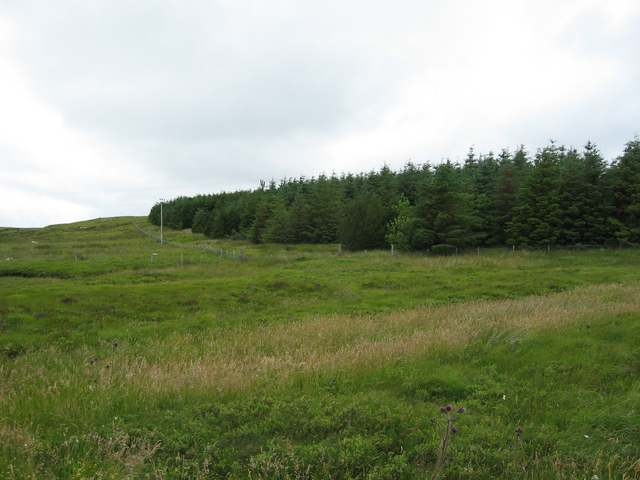 Forestry plantation at Liurbost
