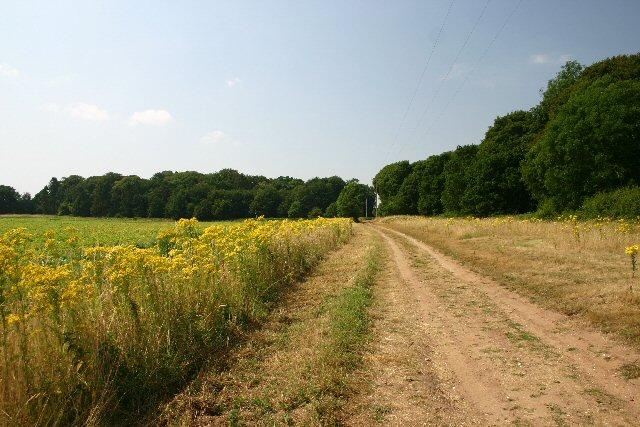 Byway at Fox Pin Plantation
